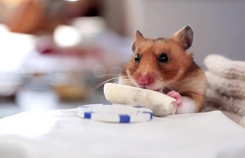 The Untold Story of the 'Tiny Hamsters Eating Tiny Burritos' Viral Video