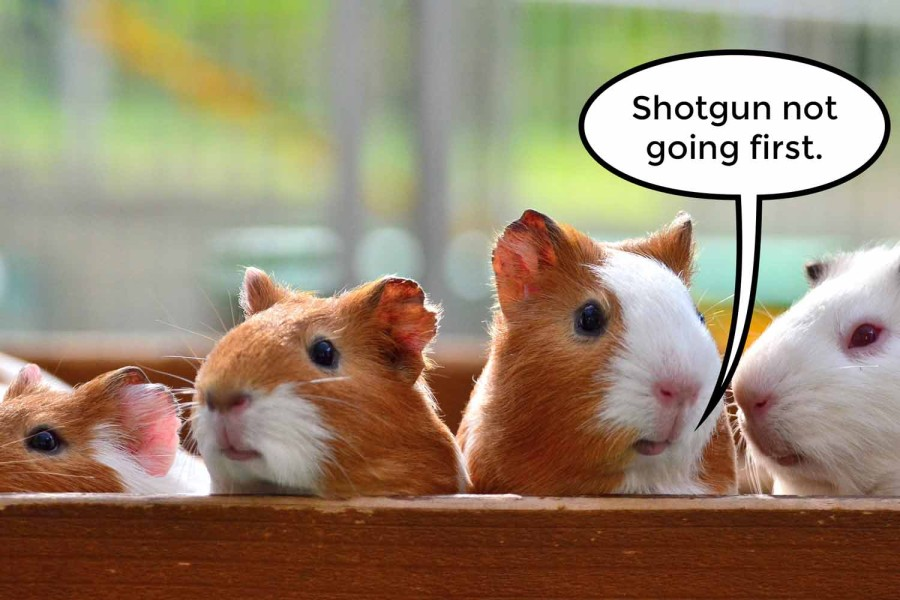 15-04-21-customer-engagement-strategy-guinea-pigs
