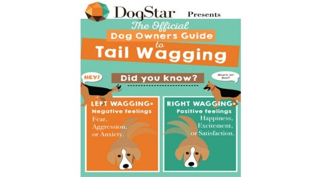 dogstar-tailtalk-smart-dog-tail-wearable-device-app-owners-US-3