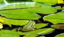 為什麼「旅蛙」們很難被投資?