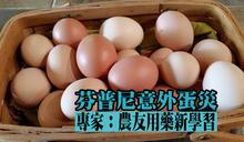 芬普尼意外蛋災 專家:農友用藥新學習