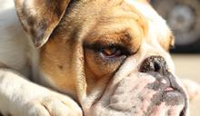 【Yahoo論壇/呂建和】流浪狗之歌:「麻煩您了,醫生!」一段人與狗的感人故事