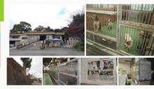 從日本看見動物保護的活化與轉變