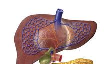 肝癌正在你肚裡長大 南韓名醫:救肝靠這招