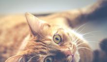 什麼都能共享?中國出現「共享貓咪」被轟不尊重生命