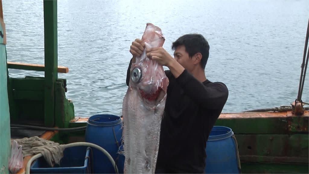 早上花蓮地震下午抓到超大地震魚!民眾:被震上來的