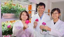 大葉大學植物工廠成功培育食用玫瑰