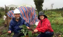 肯定陳世雄對有機農業的貢獻 有機農業運動聯盟頒獎