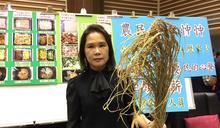 東北季風橫掃 苗縣二期稻減產 (圖)
