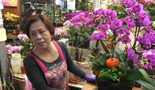 過年添喜氣心花朵朵開 這五種盆花人氣高最受歡迎