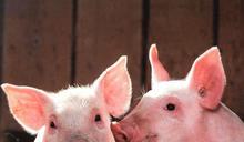 請拒絕「以暴力對抗暴力」的動物保護