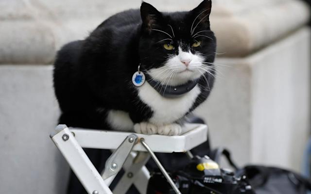 Palmerston, the Foreign Office Cat, Back at Work