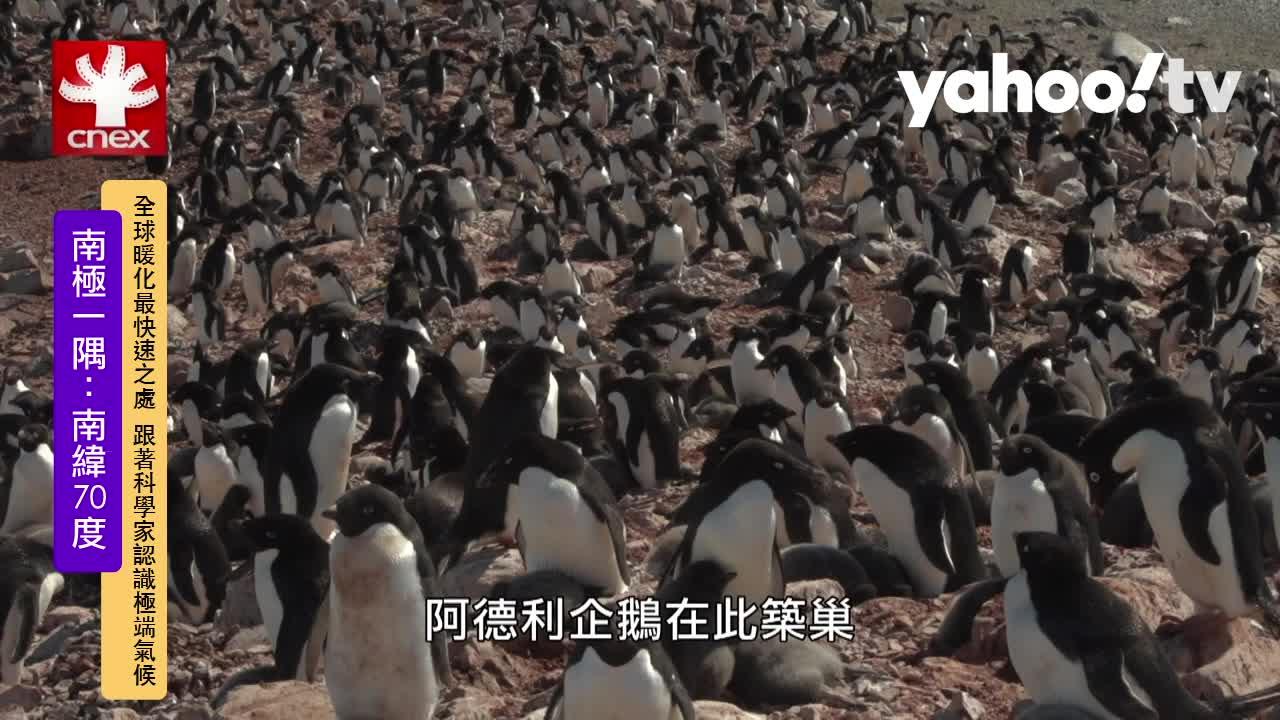 棲息地與食物變少 人類恐害企鵝滅絕