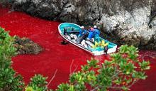 血色海灣再現:日本獵海豚傳統的生態悲歌