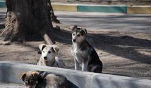 【國際流浪動物日專題之2】失控的寵物繁殖─港台共同的最大隱憂