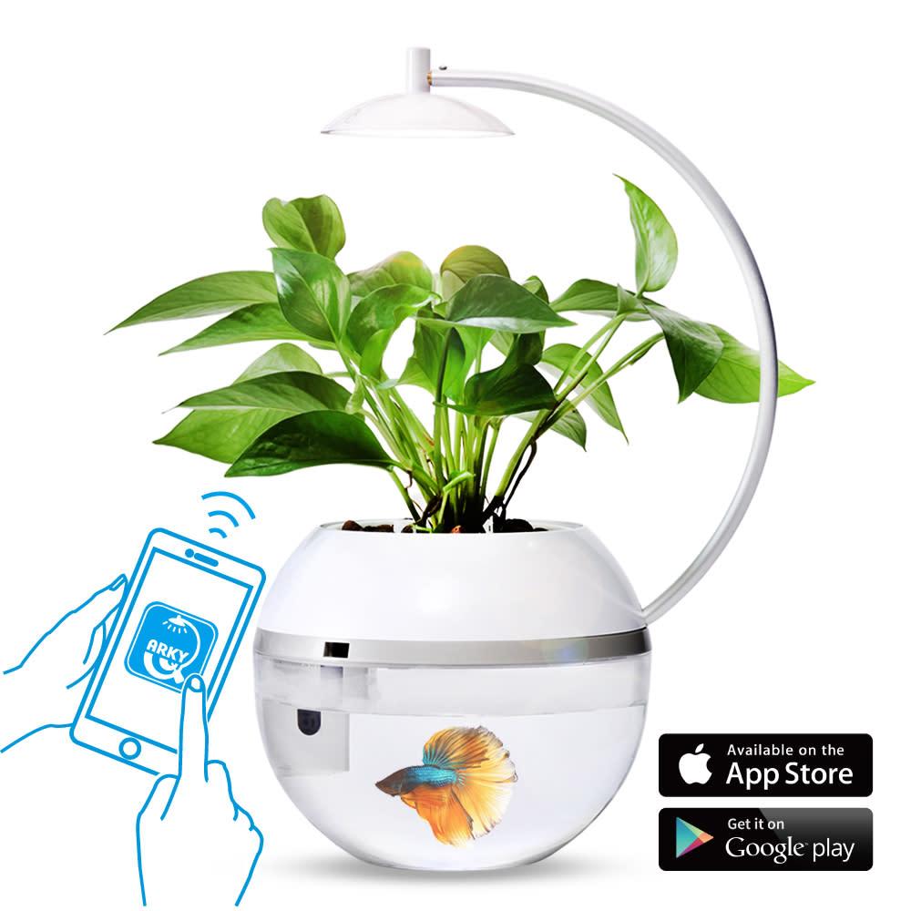 ARKY香草與魚2.0智能版
