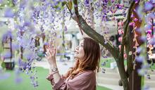 OUTLET「遊」春色 紫藤櫻花爭艷野餐「趣」