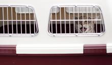 吳光平:伴侶動物運送,是行李運送嗎?