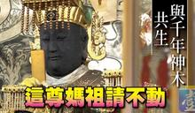 〈神蹟廟算1〉與千年神木共生 這尊媽祖請不動【壹點就報】