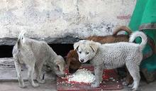 【國際流浪動物日專題之4】 借鏡保加利亞動保法,兼談台灣流浪動物問題的政策解方