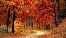 林清玄《清歡》:「秋天的心情,就像是微步中年的心境吧!」