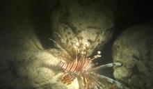 【Yahoo論壇/曾詩琴】寵物變怪物 「海洋之花」遭趕盡殺絕
