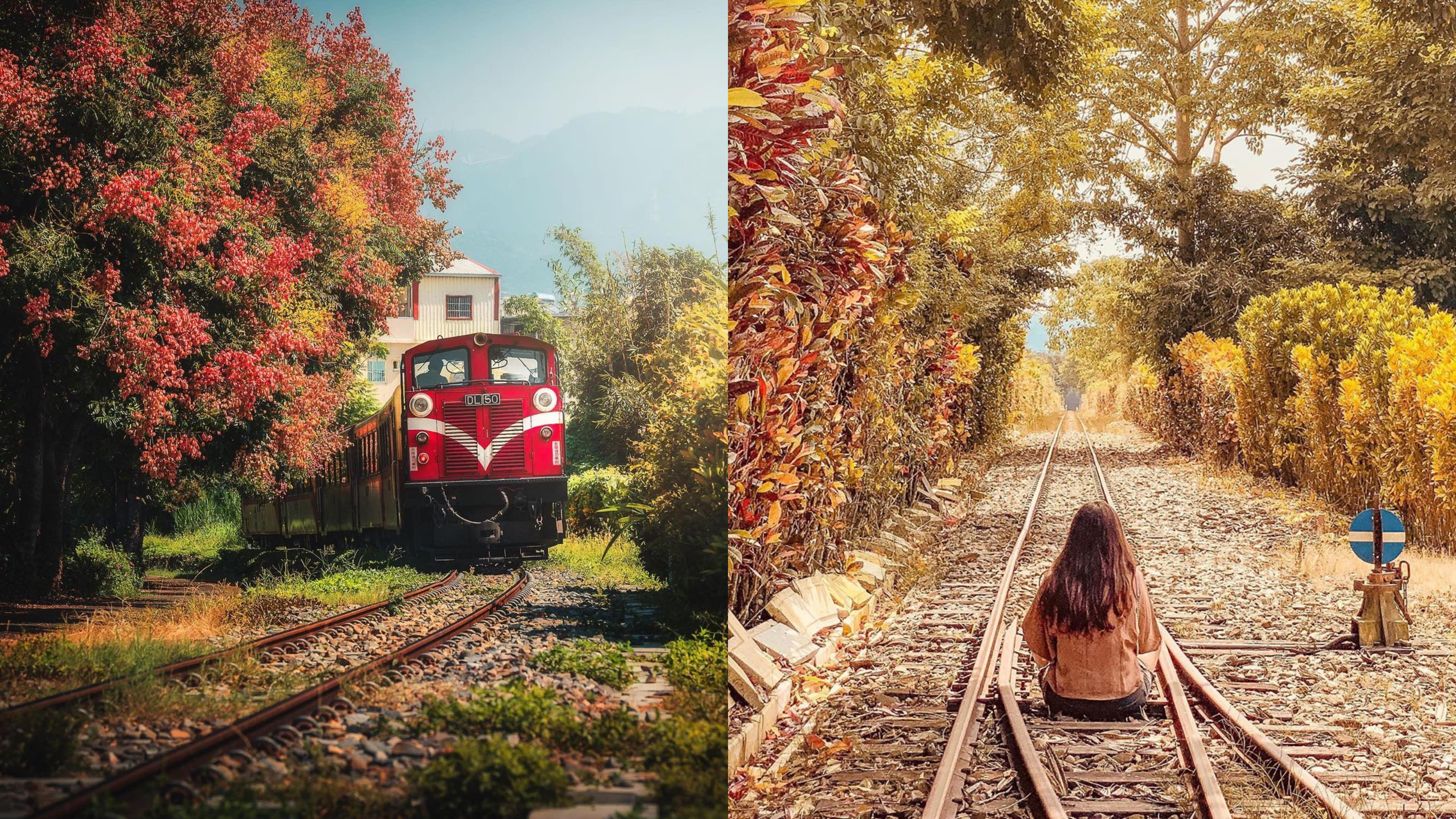 嘉義限定!秋日鐵道旅行好日本 欒樹火車、雲海茶園、漫步在日系車站
