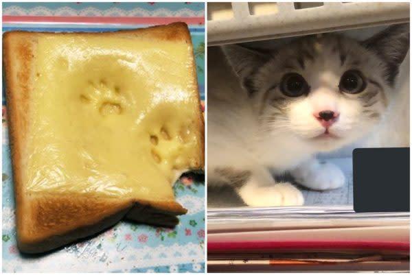 日本喵星人罪證確鑿 麵包上的貓腳印Twitter熱傳